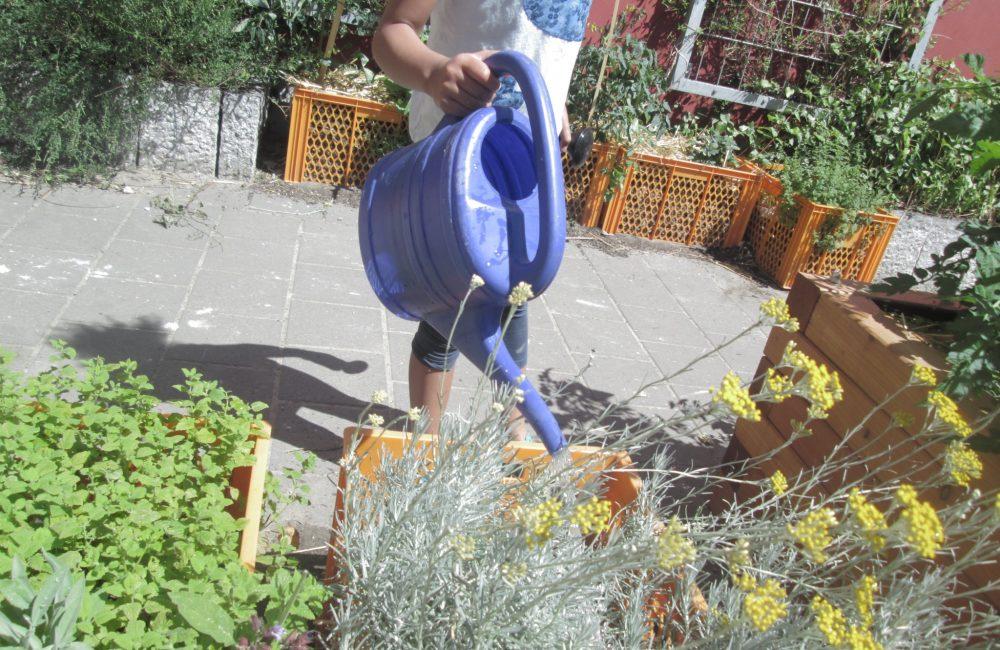 Der Schulgarten der Louise Schroeder Schule wächst stetig. Neben den hier zu sehenden Pflanzkästen finden sich auf dem Schulhof mehrere Hochbeete und einen abgezäunten Gartenbereich. Foto: M.Berthe